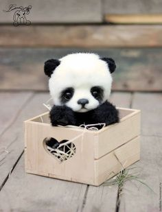 CUTE and cuddly panda. She is so cute she went in the Box and was too cute!