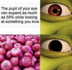 """17 Shrek Memes That'll Make Your Brain Smart But Your Head Dumb - Funny memes that """"GET IT"""" and want you to too. Get the latest funniest memes and keep up what is going on in the meme-o-sphere. Memes Humor, Shrek Memes, True Memes, New Memes, Jokes, Funny Pins, Stupid Funny Memes, Funny Relatable Memes, Hilarious"""