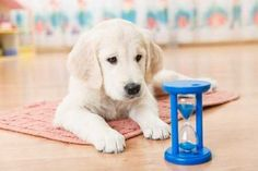 Best Dogs for Kids - 16 dog breeds to check out Best Family Dog Breeds, Best Pet Dogs, Best Dog Breeds, Small Dogs For Kids, Best Small Dogs, Child Friendly Dogs, Friendly Dog Breeds, Best Dogs For Families, Puppy Biting
