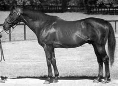 Mr. Prospector(1970)Raise A Native- Gold Digger By Nashua. 4x5 To Teddy.  14 Starts 7 Wins 4 Seconds 2 Thirds. $112,170. Leading Sire In N.A. In 1987 And 1988. Leading Broodmare Sire In N.A. From 1997-2003 And 2005-2006