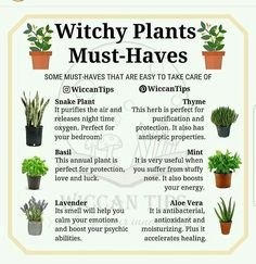 Wicca Do you grow plants at your home? I'd love to have a big garden one day but for the moment I ju Green Witchcraft, Wiccan Witch, Magick, Wiccan Spells, Witchcraft Herbs, Pagan Yule, Healing Spells, Magic Herbs, Herbal Magic