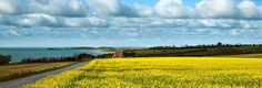 Panoramic landscape in Funen, Denmark where my family emigrated from to America.
