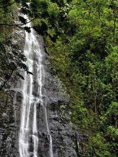 Manoa Falls, Oahu, Hawaii Helicopter view for us. Amazing close view. We loved it. Summer 12'