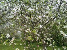 ¿Sabes que  desde el Coto del Pomar  puedes contemplar decenas de manzanos floreciendo todos a un tiempo?