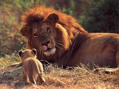 This must be father and son :)