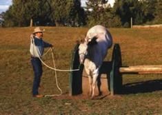 Focus on the Squeeze Game - Natural Horse Magazine