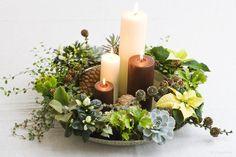 Christmas plants in new ways | Greenduck