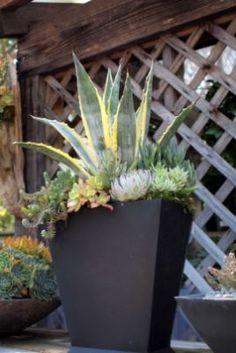 Beauty Succulents Pots Arrangement Tips 34