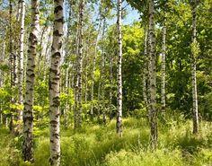Fototapeta Jarní les ✓ Snadná instalace ✓ 365 denní záruka vrácení peněz ✓ Procházejte ostatní vzory z této kolekce!