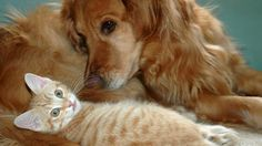 Furry friends, cat and dog.