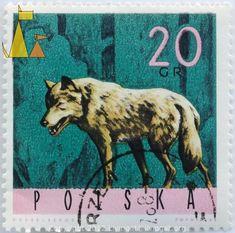 Grey Wolf on Green, Polska, Poland, stamp, mammal, Canis lupus, 20 Grm Desselberger, PWPW, 1968