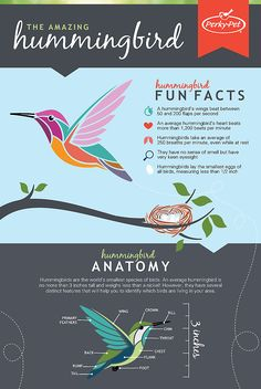 Hummingbird Infographic                                                                                                                                                                                 More