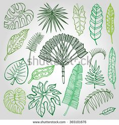 stock-vector-tropical-palm-leaves-set-vector-leaf-outline-drawing-in-vintage-style-isolated-on-white-green-365101676.jpg (450×470)