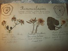 herbier, French
