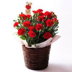 鮮やかな赤のカーネーションは愛があふれる母の日ギフトの定番!【生花 カーネーション レッド】