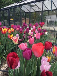Plants, Garden, Garten, Planters, Gardening, Outdoor, Home Landscaping, Plant, Tuin