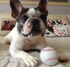 French Bulldog Lola ❤️