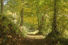 autunno sulle colline dei monti Lessini Chiampo ( Vicenza) Italy