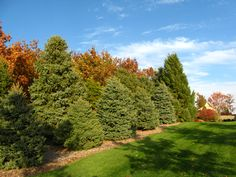 acreage landscaping - Google Search- lots of pics