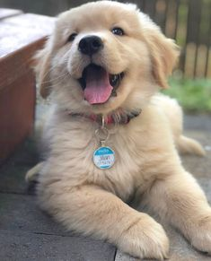 Things that make you go AWW! Like puppies, bunnies, babies, and so on. A place for really cute pictures and videos! Super Cute Puppies, Cute Baby Dogs, Cute Little Puppies, Cute Dogs And Puppies, Cute Little Animals, Cute Dogs Breeds, Doggies, Love Dogs, Dog Breeds