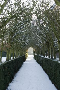 The Hornbeam Arch under Snow in the Garden at Ham House, Richmond-upon-Thames. Winter