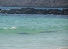 yes those are sharks right off the beach. eeek. Galapagos Ecuador.
