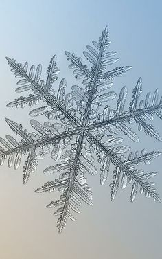 6 | Amazing Closeups Of Snowflakes Give A Little Glimpse At How Awesome Nature Is | Co.Exist | ideas + impact