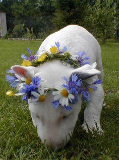Flower Bully