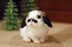 Mustache bunny