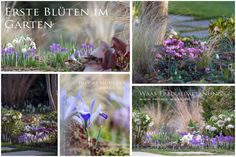 Blumenzwiebeln für schöne Blumenbeete im Frühling und Frühsommer jetzt schon planen Die Pflanzplanung für Blumenzwiebeln...