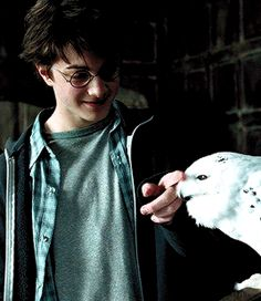 Harry Potter Characters As Dogs most Harry Potter And The Cursed Child Experience, Harry Potter Movies Release Dates my Harry Potter Characters How They Should Look nor Harry Potter Lives Forever Fanfiction Daniel Radcliffe Harry Potter, Harry James Potter, Harry Potter Tumblr, Mundo Harry Potter, Harry Potter Pictures, Harry Potter Universal, Harry Potter Characters, Drarry, Wallpaper Harry Potter