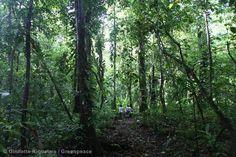Lacandona Rainforest, State of Chiapas, Mexico