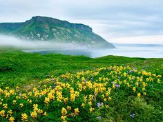 Stretching northeast of Japan to the tip of Kamchatka, this 56-island chain is home to hot springs, dozens of active volcanoes, and habitats as diverse as alpine tundras to lush grasslands.