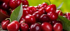 Miracle Cure for Gout Pain? Six cherries a day