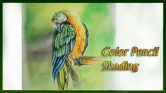 Realistic Color Pencil Drawing Tutorial of a Macaw Parrot