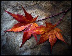 Fall Paint #aloettefall