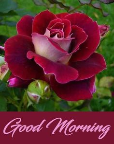Looking for for images for good morning handsome?Check this out for unique good morning handsome inspiration. These entertaining quotes will brighten your day. Inspirational Good Morning Messages, Love Good Morning Quotes, Good Morning Roses, Good Morning Msg, Good Morning Handsome, Good Morning Cards, Good Morning World, Morning Wish, Morning Thoughts