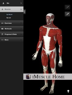 iMuscle Home - Create multiple users within iMuscle Home. Ideal for fitness instructors and physiotherapists. Health And Fitness Apps, You Fitness, At Home Workouts, Exercises, Muscle, Create, Home Workouts, Exercise Routines, Excercise