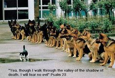 ( I love this photo Line up of Police dogs and a cat ) Some doggies do earn a living. Police dogs in particular. Most Police dogs are Germa. Funny Animal Pictures, Dog Pictures, Funny Animals, Cute Animals, Wild Animals, Animal Pics, Funny Images, Hilarious Pictures, Animals Photos