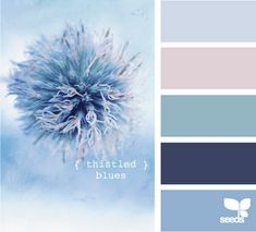 Thistled blues. Light gray blue, light dusty pink, dusty blue, navy and periwinkle.