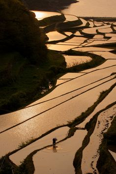 Terraced rice fields in Saga, Japan 浜野浦 棚田