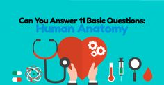 General anatomy is a like a roadmap for the human body. It is quite fascinating if you think how the major organs of our body are supported by a network of nerves and blood vessel, how the heart continues to beat and make the sound of lub dub, and how a number of different muscles are responsible for all your facial expressions. Take this fun and educational quiz about the basic human anatomy and test your knowledge! Blood Vessels, Facial Expressions, Our Body, Human Anatomy, Your Brain, Trivia, Human Body, Quizzes, Muscles