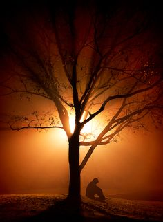 A Collection of photos which express the deepest emotions, like solitude, peace and loneliness. Beautiful World, Beautiful Places, Beautiful Pictures, Beautiful Hearts, Sad Pictures, You're Beautiful, Tree Photography, Sunset Photography, Foto Art