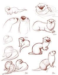 how to draw otters holding hands - Google Search