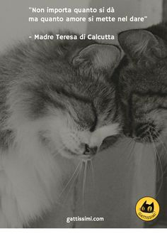Cat Art, Quote Of The Day, Funny Pictures, Cinema, Pets, My Love, Angel, Creative, Quotes