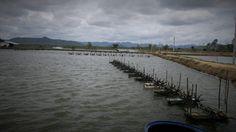 Hiện trạng và giải pháp cho môi trường thủy sản   Mạng Thủy sản Việt Nam