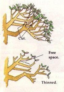 Ramification Bonsai Recherche Google Bonsai Tree Bonsai Tree Care Bonsai Techniques