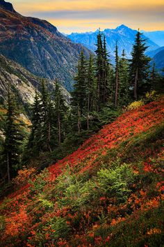 Cascade Pass (formerly known as Skagit Pass) over the northern Cascade Range, east of Marblemount, Washington >>> Wow - this is gorgeous!