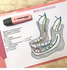 Dental Assistant Study, Dental Hygiene Student, Dental Art, Dental Hygienist, Dental Photos, Dental Photography, Dental Anatomy, Restorative Dentistry, Dental Technician