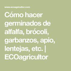 Cómo hacer germinados de alfalfa, brócoli, garbanzos, apio, lentejas, etc. | ECOagricultor